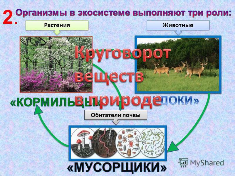 это такое содружество живой и неживой природы, в котором все обитатели чувствуют себя как дома Экосистема - 1.