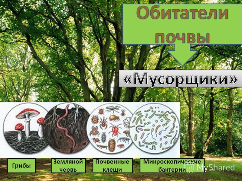 Животные Органические вещества растения Органические вещества животного Что происходит с растением в теле животного?