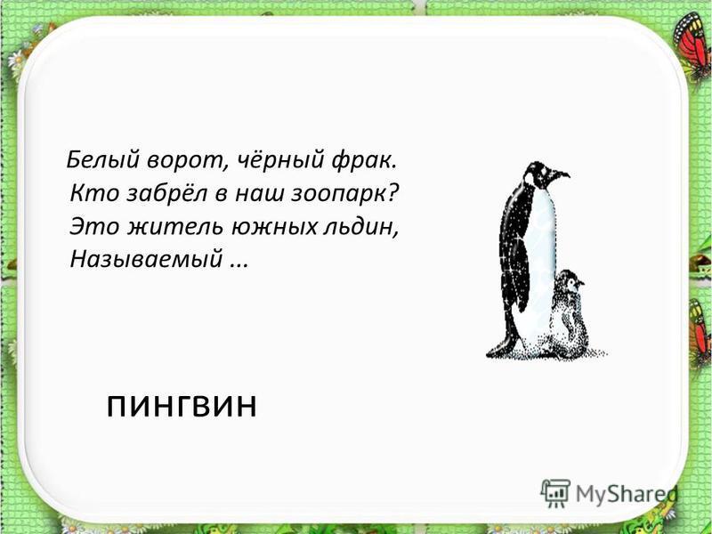 пингвин Белый ворот, чёрный фрак. Кто забрёл в наш зоопарк? Это житель южных льдин, Называемый...