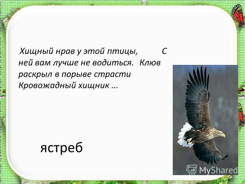 ястреб Хищный нрав у этой птицы, С ней вам лучше не водиться. Клюв раскрыл в порыве страсти Кровожадный хищник...