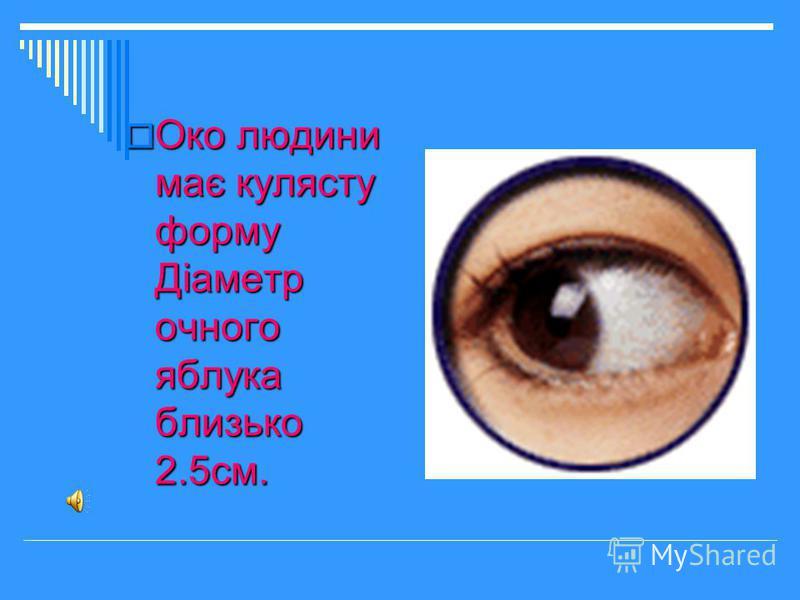 Око людини має кулясту форму Діаметр очного яблука близько 2.5см. Око людини має кулясту форму Діаметр очного яблука близько 2.5см.