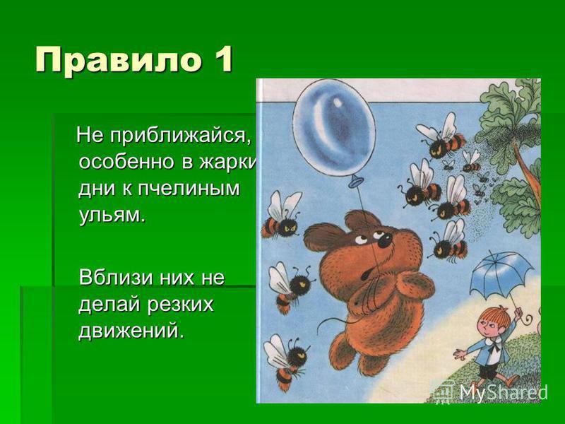 Правило 1 Не приближайся, особенно в жаркие дни к пчелиным ульям. Не приближайся, особенно в жаркие дни к пчелиным ульям. Вблизи них не делай резких движений.