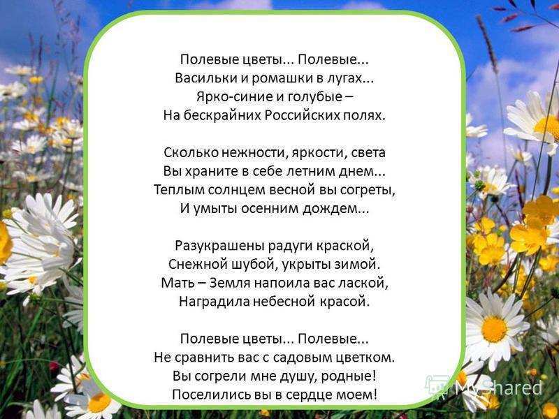 Полевые цветы... Полевые... Васильки и ромашки в лугах... Ярко-синие и голубые – На бескрайних Российских полях. Сколько нежности, яркости, света Вы храните в себе летним днем... Теплым солнцем весной вы согреты, И умыты осенним дождем... Разукрашены