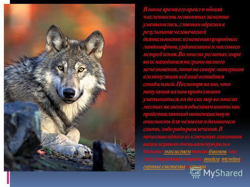 В наше время его ареал и общая численность животных заметно уменьшились, главным образом в результате человеческой деятельности: изменения природных ландшафтов, урбанизации и массового истребления. Во многих регионах мира волк находится на грани полн