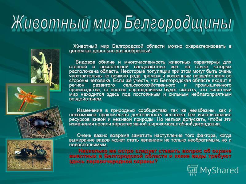 Животный мир Белгородской области можно охарактеризовать в целом как довольно разнообразный. Животный мир Белгородской области можно охарактеризовать в целом как довольно разнообразный. Видовое обилие и многочисленность животных характерны для степно