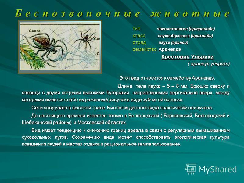 Б е с п о з в о н о ч н ы е ж и в о т н ы е тип членистоногие ( артропода) тип членистоногие ( артропода) класс паукообразные ( арахнида) класс паукообразные ( арахнида) отряд пауки (аранеи) отряд пауки (аранеи) семейство Аранеидэ семейство Аранеидэ