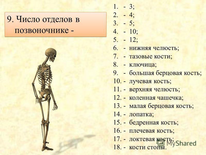 8. В коленном суставе сочленяются кости - 1.- 3; 2.- 4; 3.- 5; 4.- 10; 5.- 12; 6.- нижняя челюсть; 7.- тазовые кости; 8.- ключица; 9.- большая берцовая кость; 10.- лучевая кость; 11.- верхняя челюсть; 12.- коленная чашечка; 13.- малая берцовая кость;