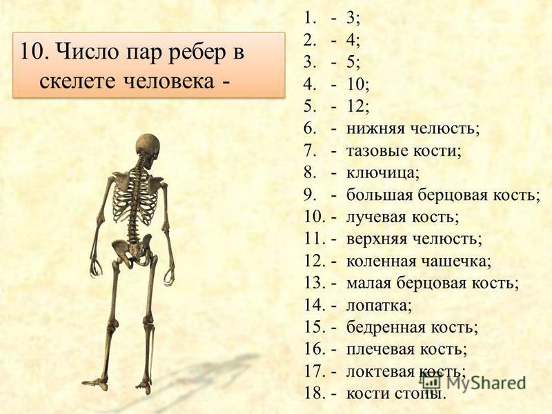 9. Число отделов в позвоночнике - 1.- 3; 2.- 4; 3.- 5; 4.- 10; 5.- 12; 6.- нижняя челюсть; 7.- тазовые кости; 8.- ключица; 9.- большая берцовая кость; 10.- лучевая кость; 11.- верхняя челюсть; 12.- коленная чашечка; 13.- малая берцовая кость; 14.- ло