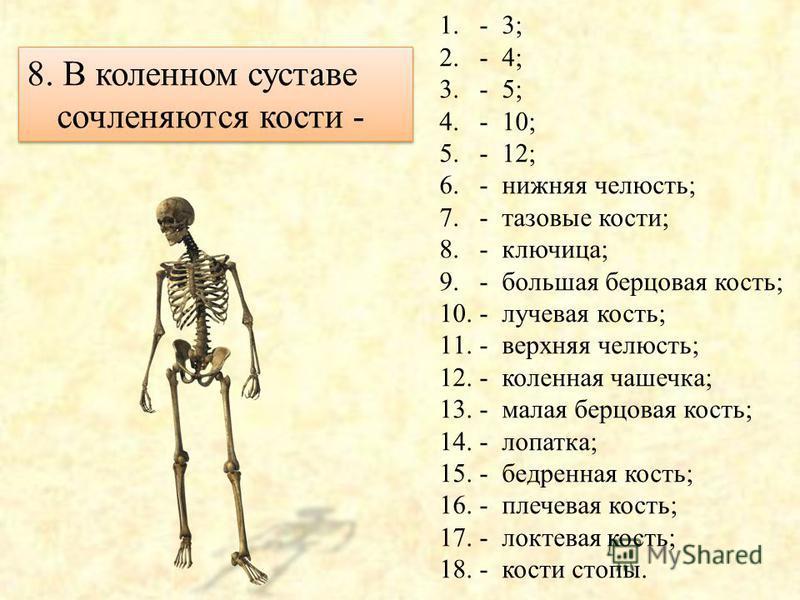 1.- 3; 2.- 4; 3.- 5; 4.- 10; 5.- 12; 6.- нижняя челюсть; 7.- тазовые кости, 8.- ключица; 9.- большая берцовая кость; 10.- лучевая кость; 11.- верхняя челюсть; 12.- коленная чашечка; 13.- малая берцовая кость; 14.- лопатка; 15.- бедренная кость; 16.-