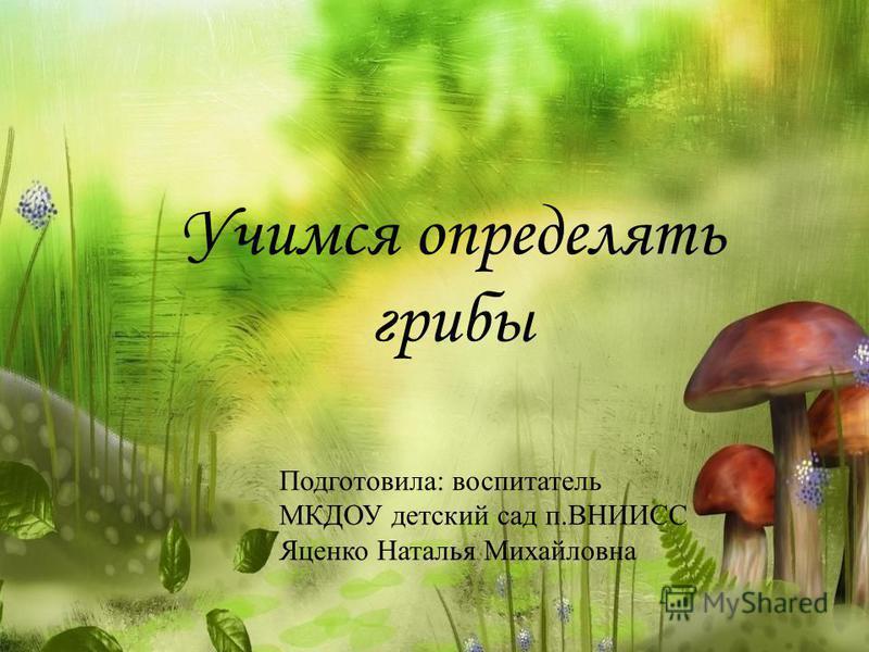 Учимся определять грибы Подготовила: воспитатель МКДОУ детский сад п.ВНИИСС Яценко Наталья Михайловна