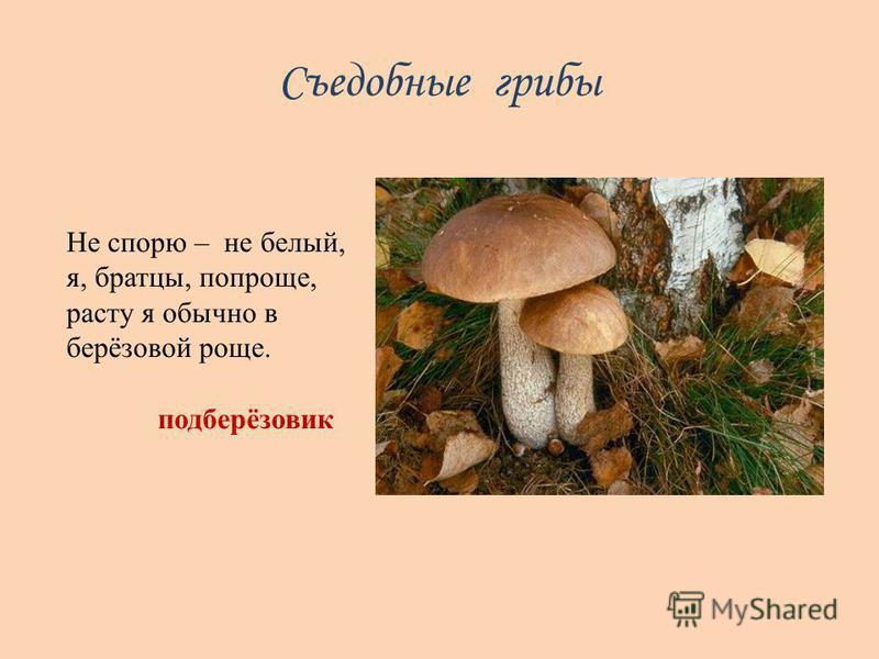 Съедобные грибы Не спорю – не белый, я, братцы, попроще, расту я обычно в берёзовой роще. подберёзовик