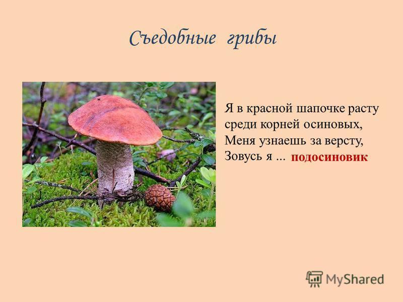 Съедобные грибы Я в красной шапочке расту среди корней осиновых, Меня узнаешь за версту, Зовусь я... подосиновик