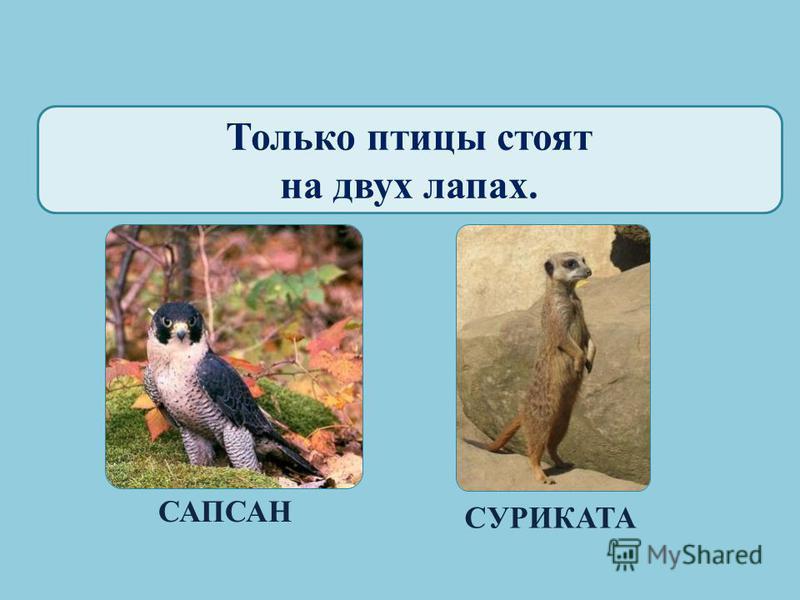 Только у птиц яркая окраска. СВИРИСТЕЛЬЖИРАФ