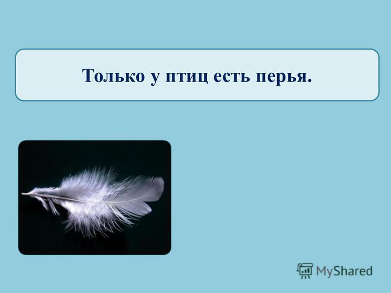 Только птицы стоят на двух лапах. САПСАН СУРИКАТА