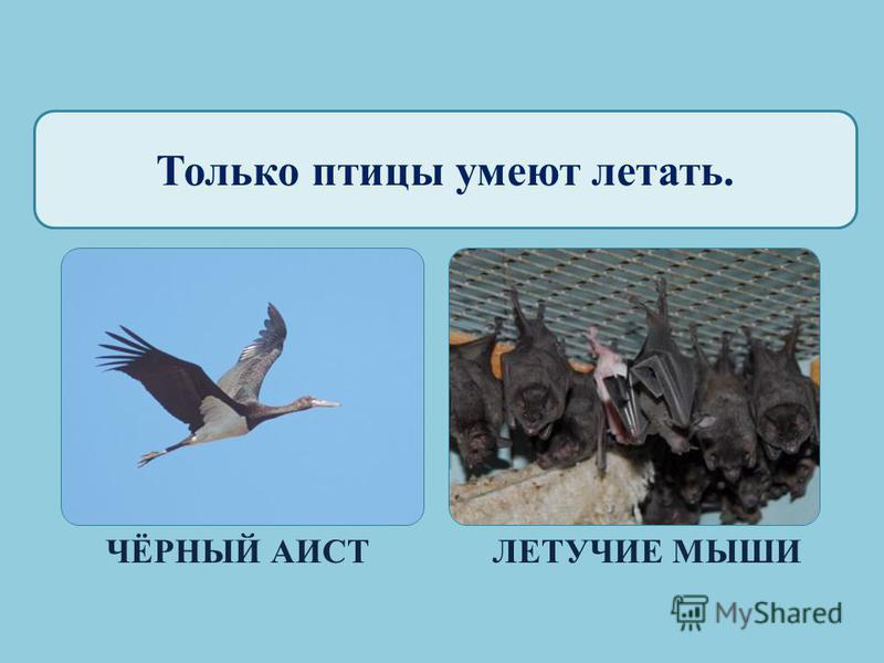 Окружающий мир 1 класс УМК «Школа России» «Кто такие ПТИЦЫ?»