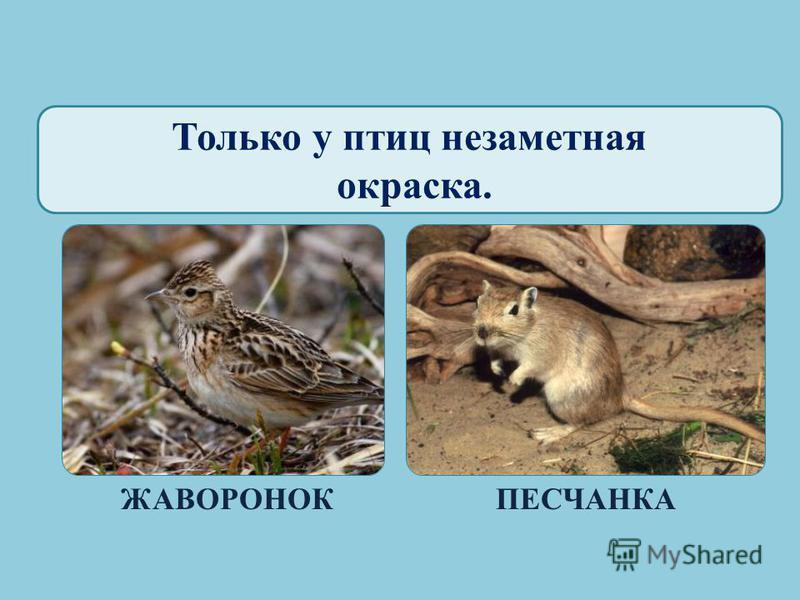Только птицы вылупляются из яиц. ПТЕНЕЦ ЖУРАВЛЯ КЛАДКА ЯИЦ ДРОЗДА ПИТОН