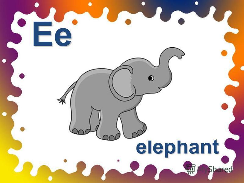 elephant Ee
