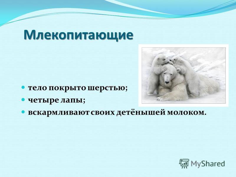 Млекопитающие тело покрыто шерстью; четыре лапы; вскармливают своих детёнышей молоком.