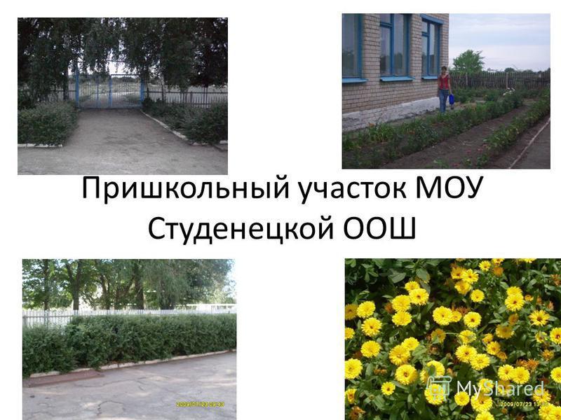 Пришкольный участок МОУ Студенецкой ООШ