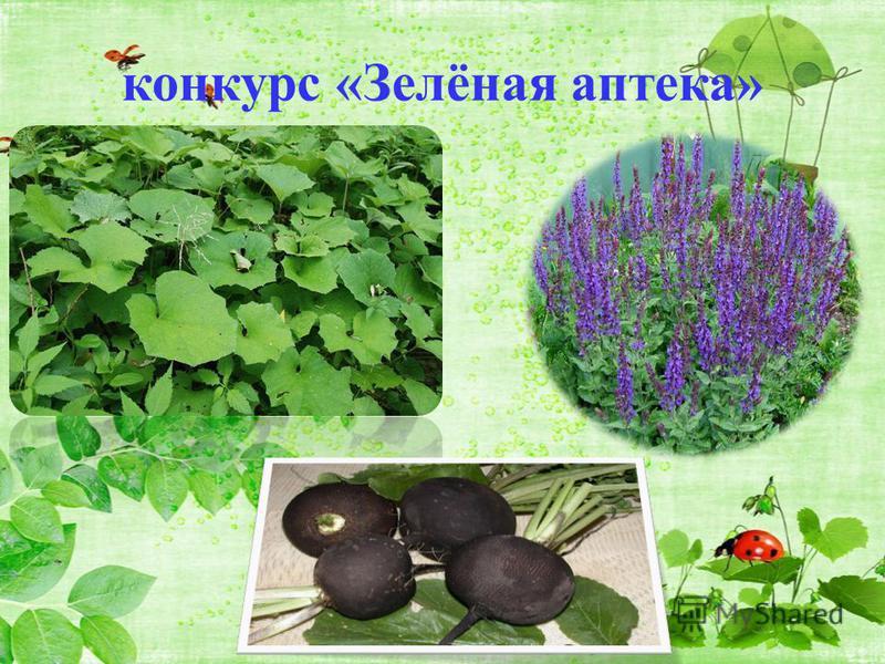 конкурс «Зелёная аптека»