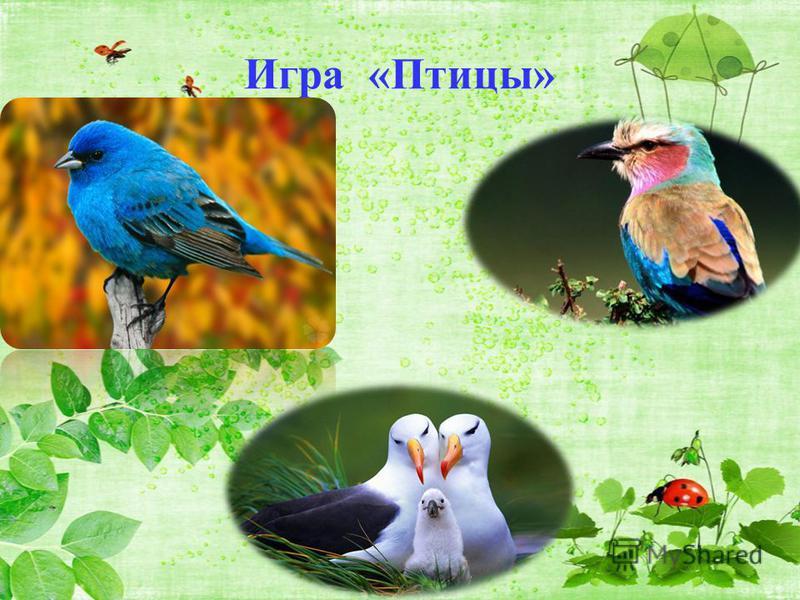 Игра «Птицы»