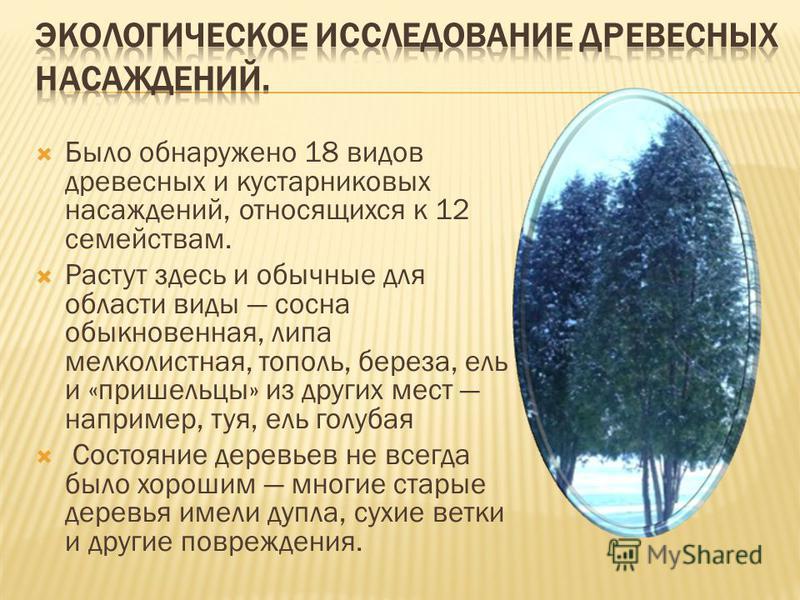 Было обнаружено 18 видов древесных и кустарниковых насаждений, относящихся к 12 семействам. Растут здесь и обычные для области виды сосна обыкновенная, липа мелколистная, тополь, береза, ель и «пришельцы» из других мест например, туя, ель голубая Сос