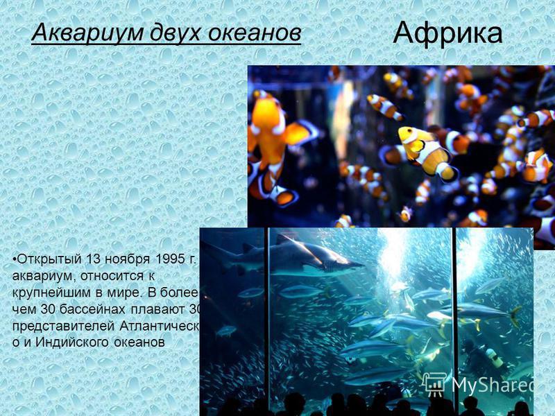 Аквариум двух океанов Аквариум двух океанов (Two Oceans Aquarium) самый большой аквариум в Южном полушарии (Кейптаун, Южно -Африканская Республика). Африка Открытый 13 ноября 1995 г. аквариум, относится к крупнейшим в мире. В более чем 30 бассейнах п
