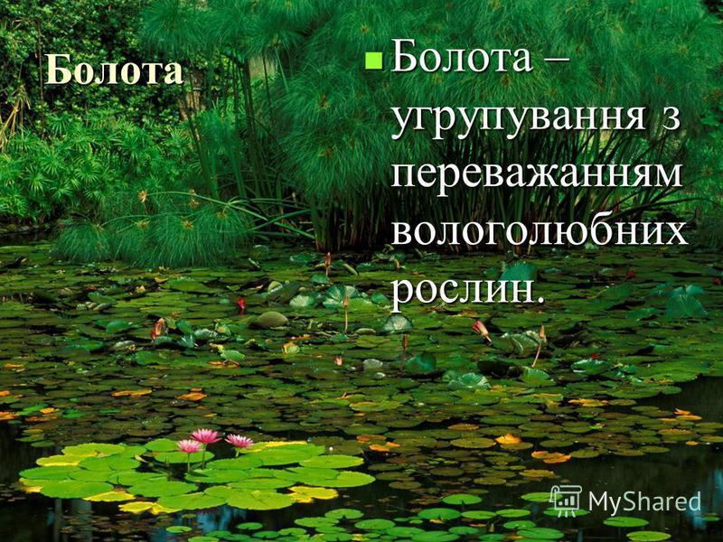 Болота Болота – угрупування з переважанням вологолюбних рослин. Болота – угрупування з переважанням вологолюбних рослин.