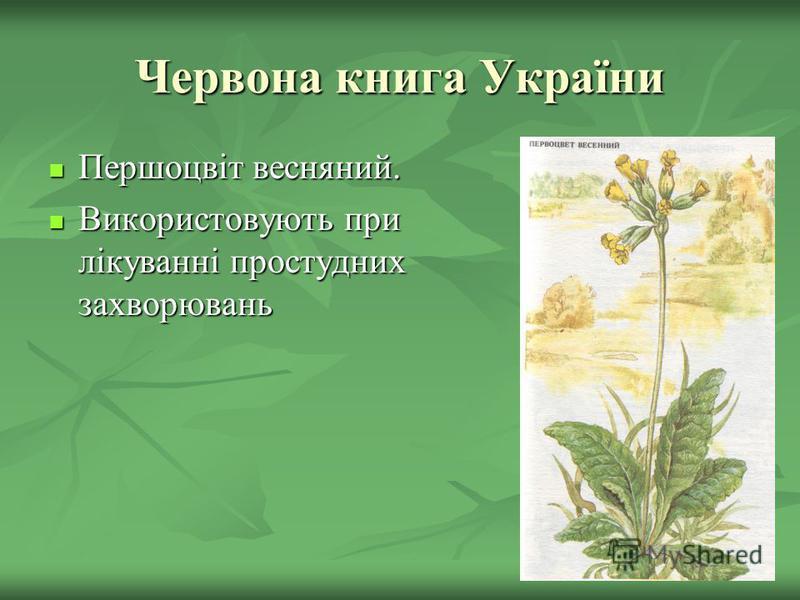 Червона книга України Першоцвіт весняний. Першоцвіт весняний. Використовують при лікуванні простудних захворювань Використовують при лікуванні простудних захворювань
