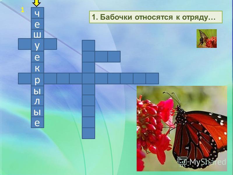ч е ш у е к р ы л ы е 1. Бабочки относятся к отряду… 1