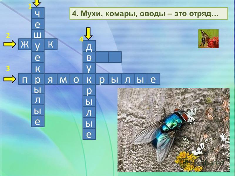 ч е ш у е к р ы л ы е ЖК прямокрылые у в д ы р л ы е 4. Мухи, комары, оводы – это отряд… 1 2 3 4
