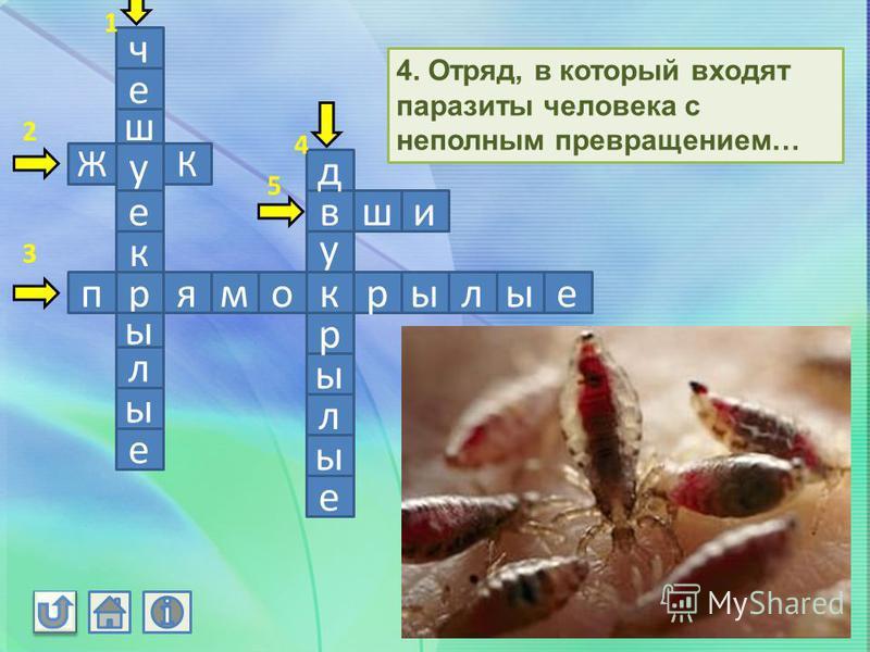 ч е ш у е к р ы л ы е ЖК прямокрылые у в д ы р л ы е иж 4. Отряд, в который входят паразиты человека с неполным превращением… 1 2 3 4 5