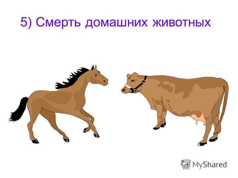 5) Смерть домашних животных