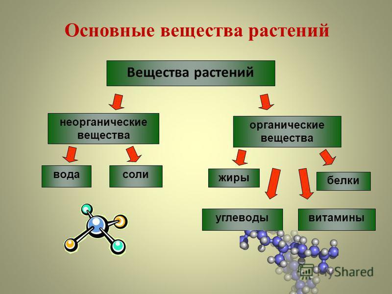 Основные вещества растений Вещества растений неорганические вещества вода соли органические вещества белки жиры углеводы витамины