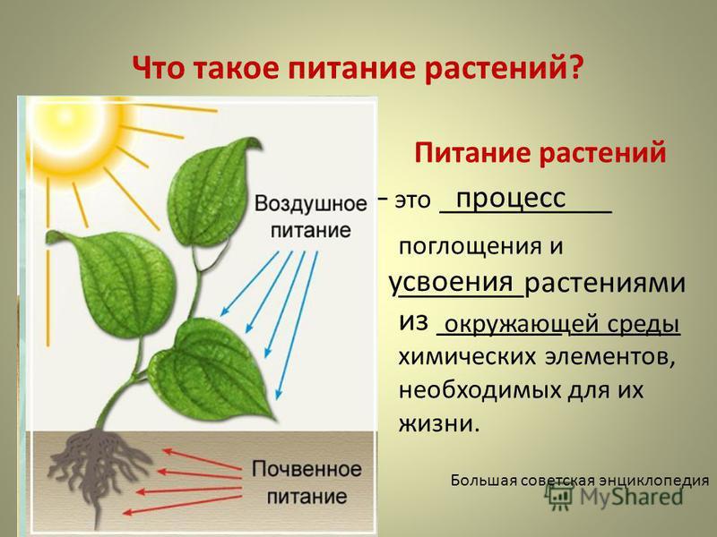 Что такое питание растений? Питание растений – это ___________ поглощения и ________растениями из ________ _______ химических элементов, необходимых для их жизни. Большая советская энциклопедия процесс усвоения окружающей среды