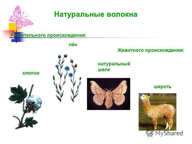 Растительного происхождения: Животного происхождения: хлопок лён натуральный шелк шерсть Натуральные волокна