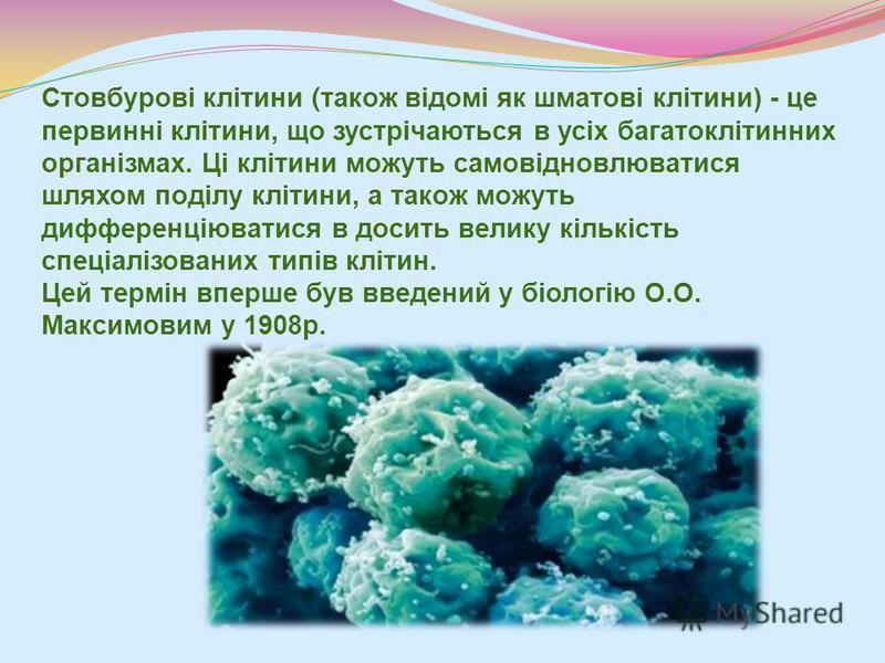 Стовбурові клітини ( також відомі як шматові клітини) - це первинні клітини, що зустрічаються в усіх багатоклітинних організмах. Ці клітини можуть самовідновлюватися шляхом поділу клітини, а також можуть дифференціюватися в досить велику кількість сп