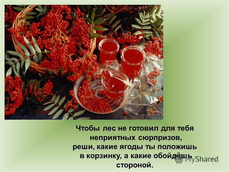 Чтобы лес не готовил для тебя неприятных сюрпризов, реши, какие ягоды ты положишь в корзинку, а какие обойдёшь стороной.