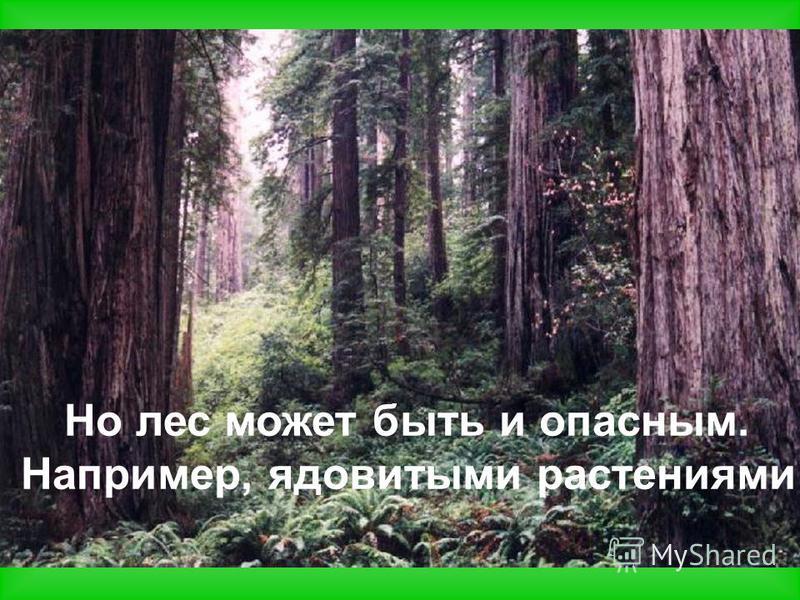 Но лес может быть и опасным. Например, ядовитыми растениями