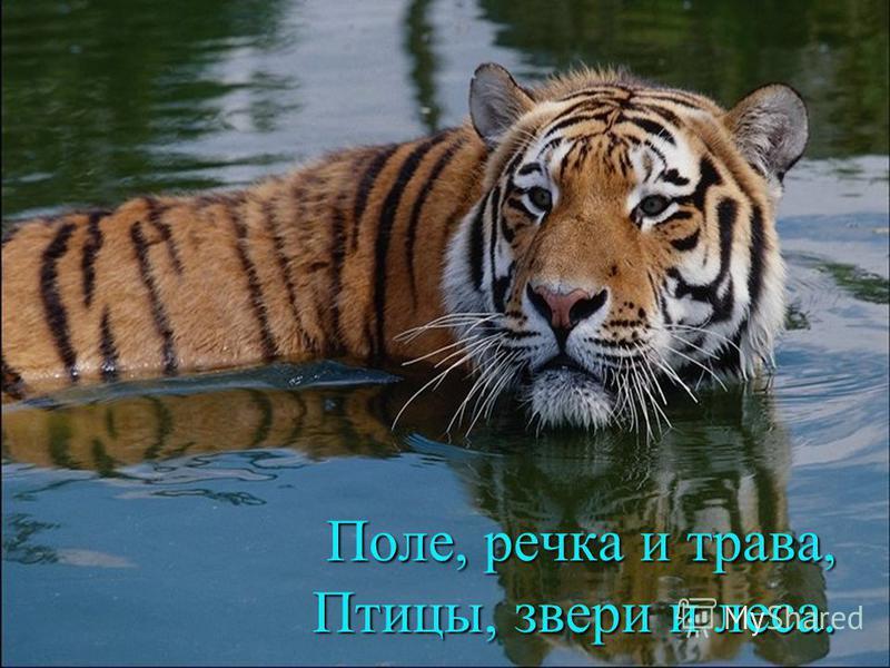 Поле, речка и трава, Птицы, звери и леса.