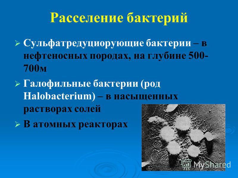 Расселение бактерий Сульфатредуциорующие бактерии – в нефтеносных породах, на глубине 500- 700 м Галофильные бактерии (род Halobacterium) – в насыщенных растворах солей В атомных реакторах