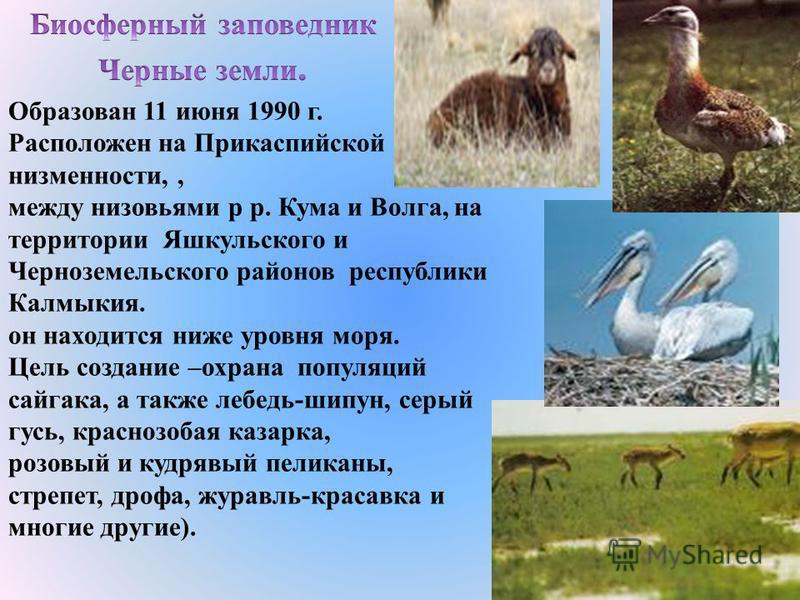 Учрежденный в 1916 г., Баргузинский заповедник стал первым в России охотничьим заповедником. Площадь 374,4 тыс. га. Расположен на северо-восточном побережье озера Байкал на центральной части западных склонов Баргузинского хребта. Наивысшая точка - 2.