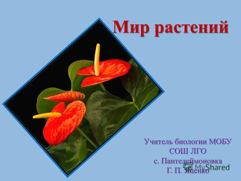 Мир растений Мир растений Учитель биологии МОБУ СОШ ЛГО с. Пантелеймоновка Г. П. Яценко
