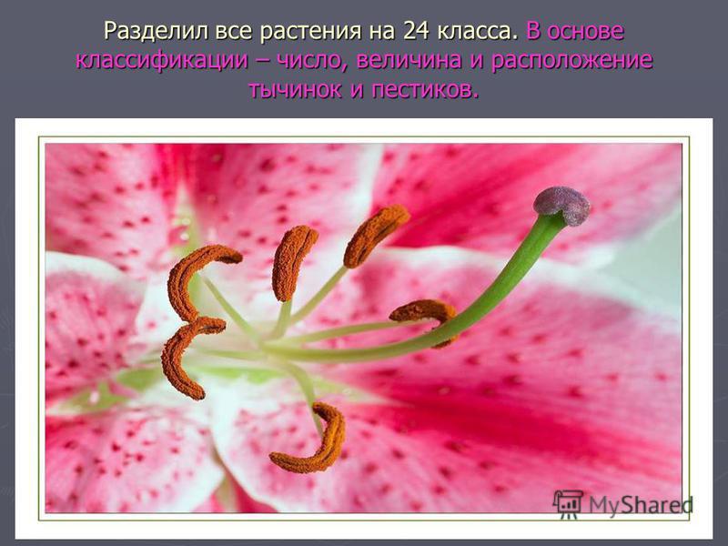 Разделил все растения на 24 класса. В основе классификации – число, величина и расположение тычинок и пестиков.