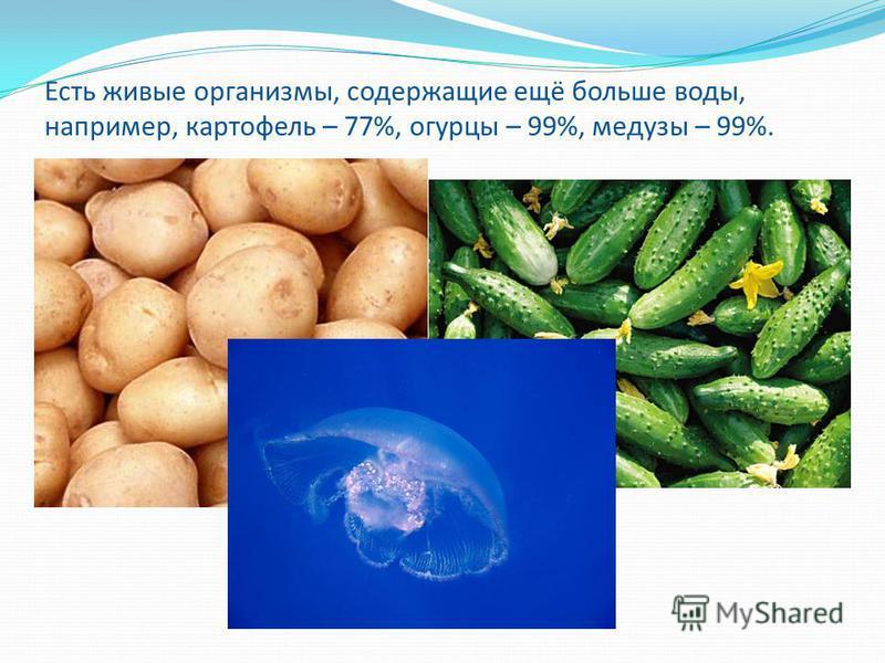 Есть живые организмы, содержащие ещё больше воды, например, картофель – 77%, огурцы – 99%, медузы – 99%.