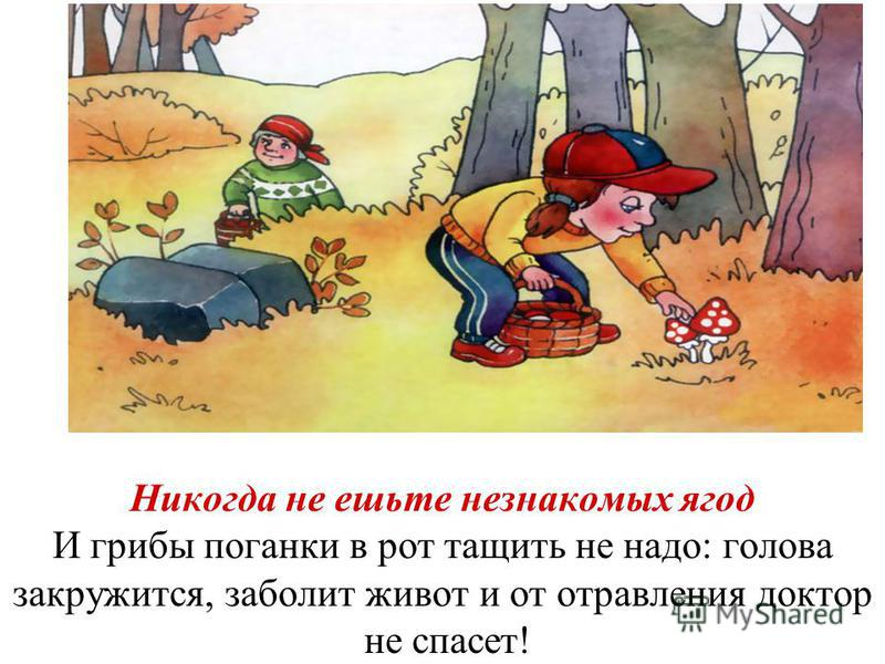 Никогда не ешьте незнакомых ягод И грибы поганки в рот тащить не надо: голова закружится, заболит живот и от отравления доктор не спасет!