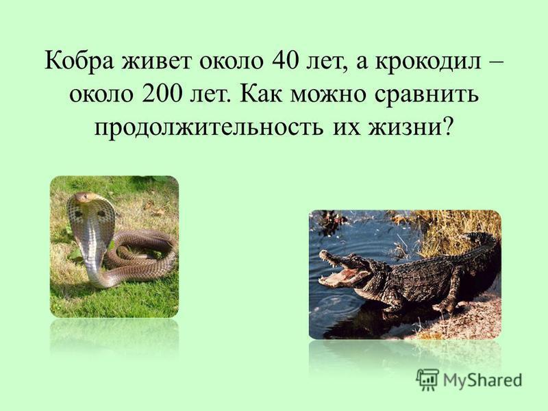 Кобра живет около 40 лет, а крокодил – около 200 лет. Как можно сравнить продолжительность их жизни?
