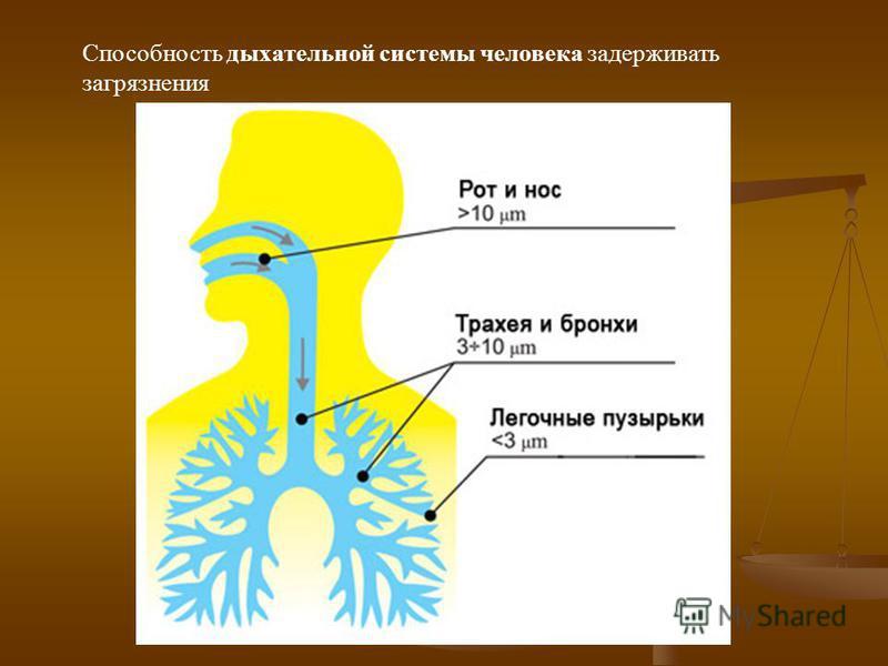 Сколько же кислорода необходимо человеку ?