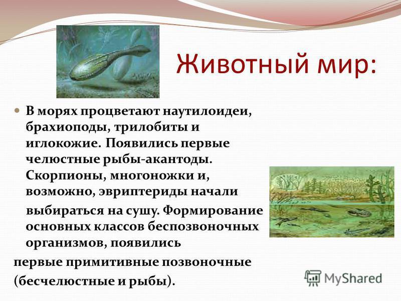 Животный мир: В морях процветают наутилоидеи, брахиоподы, трилобиты и иглокожие. Появились первые челюстные рыбы-акантоды. Скорпионы, многоножки и, возможно, эвриптериды начали выбираться на сушу. Формирование основных классов беспозвоночных организм