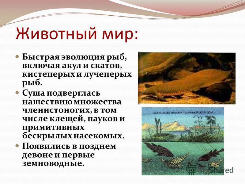 Животный мир: Быстрая эволюция рыб, включая акул и скатов, кистеперых и лучеперых рыб. Суша подверглась нашествию множества членистоногих, в том числе клещей, пауков и примитивных бескрылых насекомых. Появились в позднем девоне и первые земноводные.